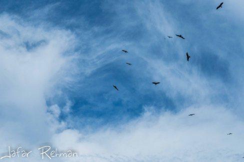 Eagles in the sky.
